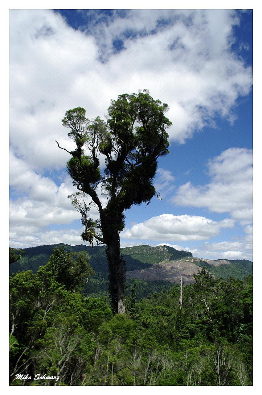 Neuseelands Bäume