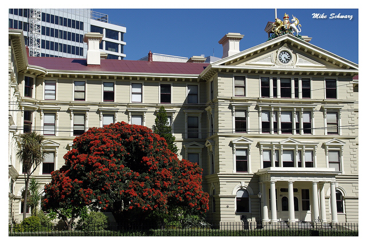 Government Building & Pohutukawa