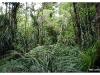 Waipoua Wald