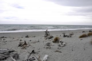 Westküste Maori Beach
