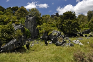 Hikurangi Limestone